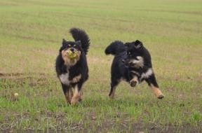 Ollie og Ainu