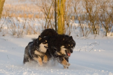 Shaki og Ainu