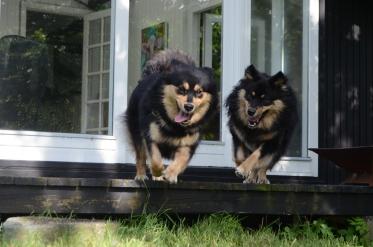 Tholie og Baloo(Markeno)