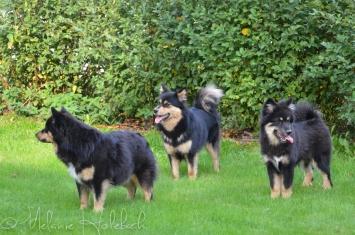 Ollie, Tholie og Ainu