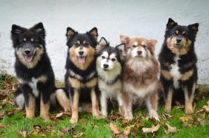 Alle fem hjemmeboende vapser; Ainu, Tholie, Mystique, Qira og Ollie!