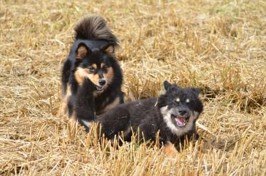 Tholie og Ainu