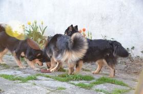 Tholie, Ranec og Ollie