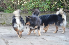 Tholies rumpe, Ollie og Ranec