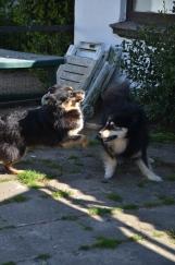 Ollie og Isak