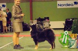 Ainu BIS4 Puppy