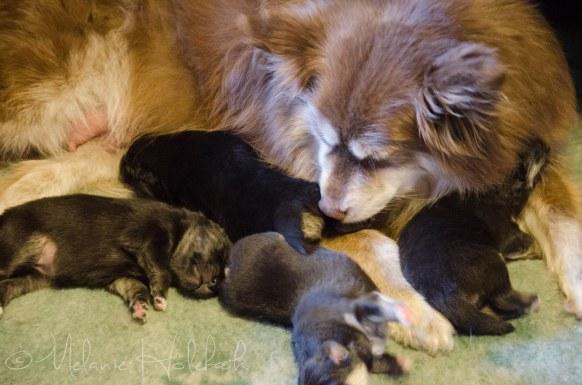 Qira and puppies <3
