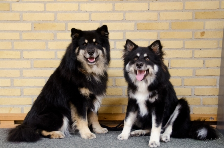 Ainu and Porhtos