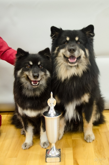 Mera and Ainu posing with their trophy from last year as best brace.. This year they were number two!