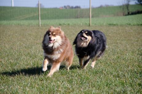 Shelby med søster Vica efter sig!